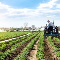 Agricultura sustentable: la importancia de respetar la biodiversidad