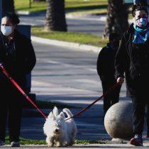 Modificación a la Ley de Copropiedad busca eliminar la prohibición de tener mascotasen edificios