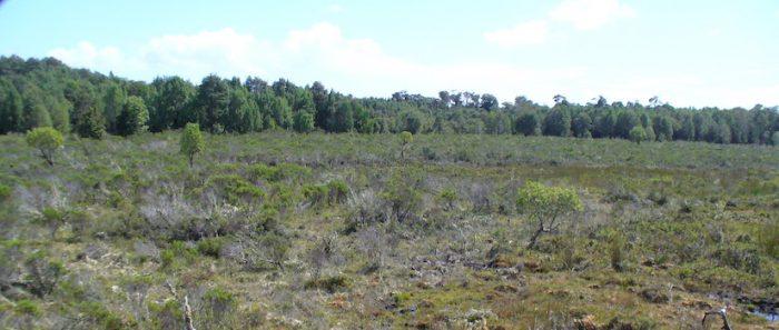Investigación determinó que incendios forestales en bosques sureños generandaños que pueden durar más de cinco décadas