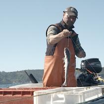 #RutadelasCaletas: Pescadores artesanales llegan al comercio electrónico