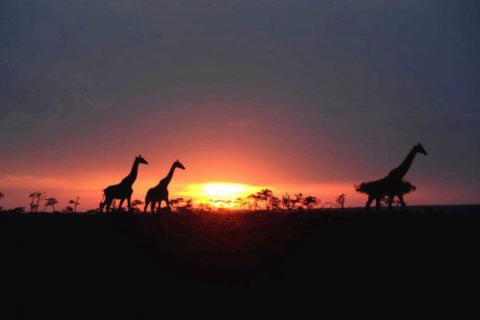 Kenia: el paraíso de la vida salvaje