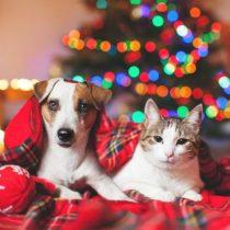 Colegio Médico Veterinario advierte sobre las mascotas como regalo de Navidad