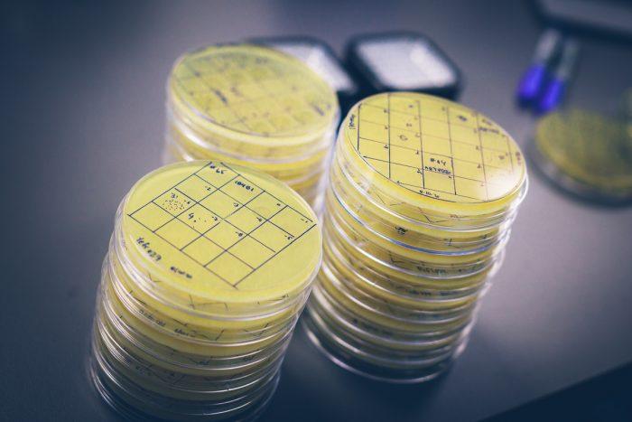 Innovadoras propuestas para reducir el uso de antibióticos en animales