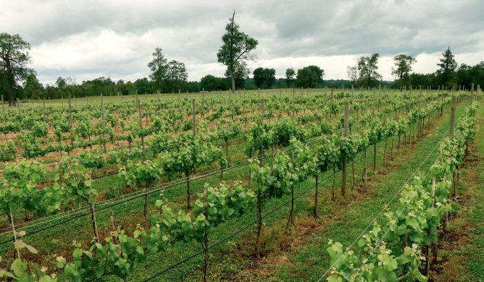 Desarrollan investigaciones sobre vino espumante único en el país