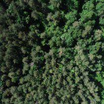 Aumentar la biodiversidad de los bosques hará que resistan al cambio climático