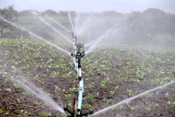 Crean plataforma agrícola para determinar las necesidades de riegode los cultivos en tiempo real