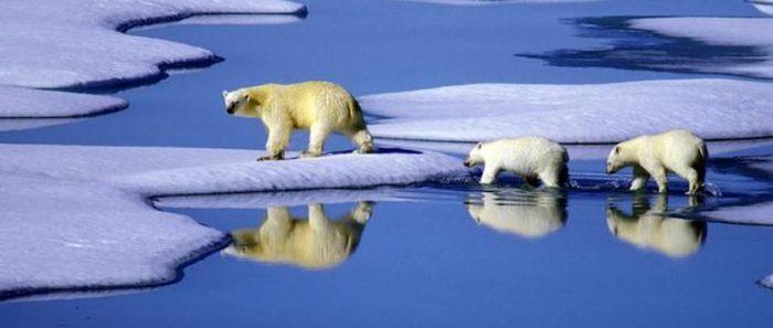Estudio asegura que la desaparición mundial del hielo se está acelerando