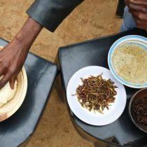 Termitas en el menú: protegiendo los insectos comestibles de Sudáfrica