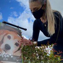 Compostaje de mascotas muertas para crear nueva vida en Colombia