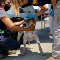 Quilpué: PDI instaló centro de ayuda para mascotas afectadas por el incendio forestal