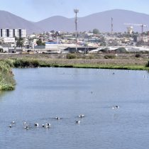 Proyecto piloto monitoreará humedales en Coquimbo