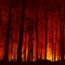 Incendios de vegetación amenazan viviendas: la seguridad es cambiar a comunidades urbanas resistentes