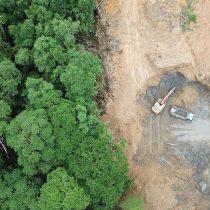 Combatir la deforestación mundial con Inteligencia Artificial en dos pasos