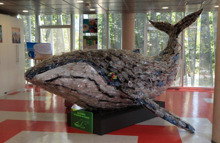 """""""Cetácea, Ecos del Mar"""": conociendo la biodiversidad marina"""