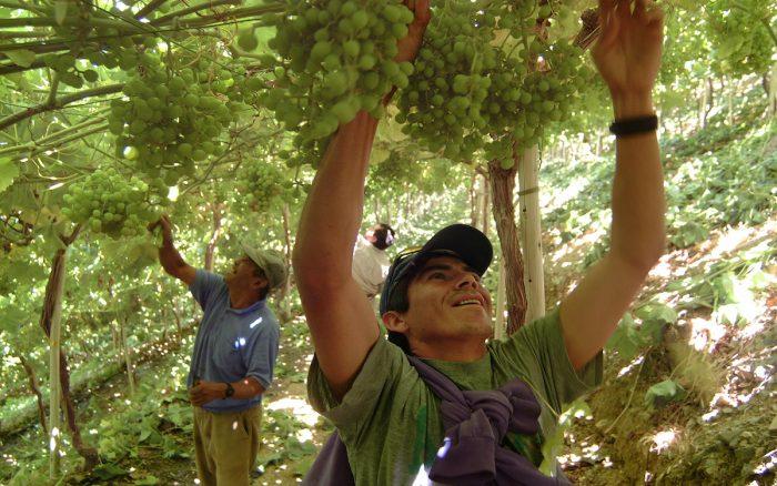 Destinan $120 millones para impulsar experiencias que complementen procesos de innovación agraria