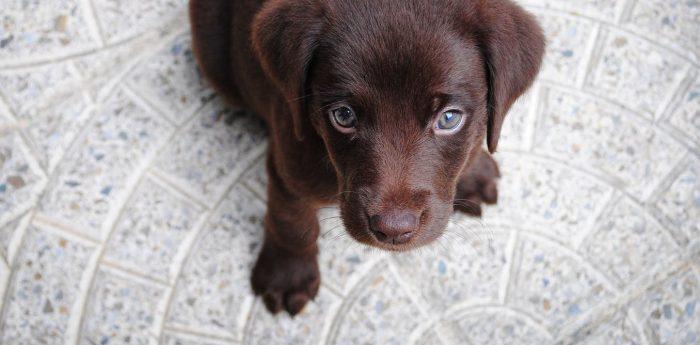 Cómo ayudar a perros y gatos a manejar la ansiedad por separación cuando sus humanos regresan al trabajo