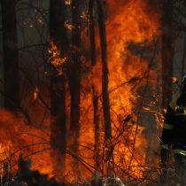 Intendencia del Biobío declara alerta roja para comuna de Nacimiento por incendio forestal