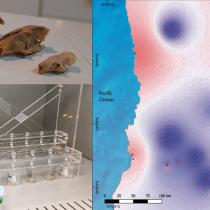 Registran evidencia de migración humana en los Andes meridionales previa a la llegada de los incas
