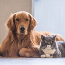 Cinco proyectos ganadorestuvo la primera versión del concurso científico decuidado y bienestar de mascotas