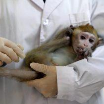 Empresa de Elon Musk implanta chip a un mono para que juegue