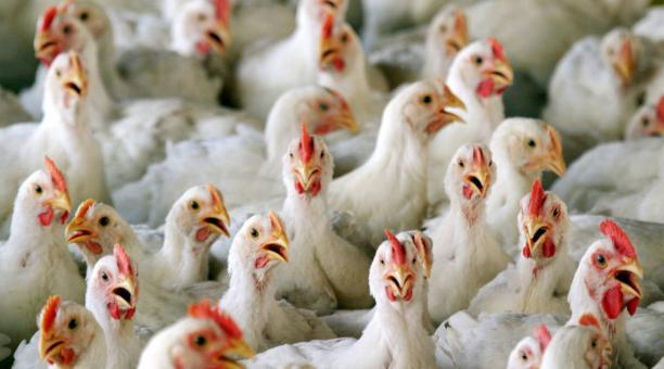 Rusia detecta primeros casos de gripe aviar H5N8 en humanos