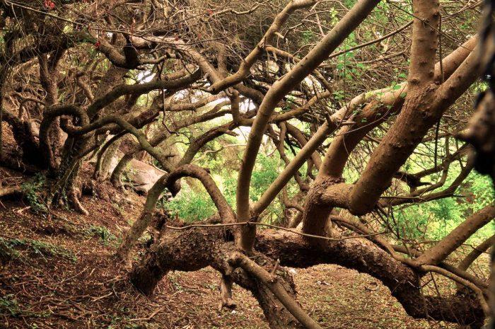 Libro propone frenar la destrucción del bosque nativo con sistema de uso sustentable