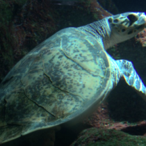 El ruido provocado por el ser humano altera la vida en los océanos