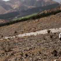 Cambio climático: nueve de cada diez chilenos ha experimentado sus efectos concretos
