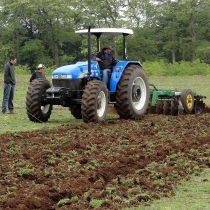 Conadi ha comprado más de 30 mil hectáreas de tierras para comunidades mapuche en los últimos meses