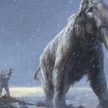 El ADN más antiguo jamás secuenciado revela claves de la evolución de los mamuts