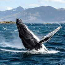 Lanzan libro de fotografías sobre ecosistemas acuáticos del país
