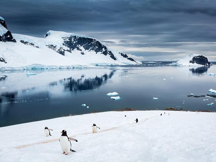 """Exposición Online """"Antártica, el continente del agua"""""""