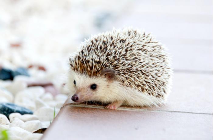 Algunos productos de limpieza de tu hogar podrían estar dañando a tu mascota