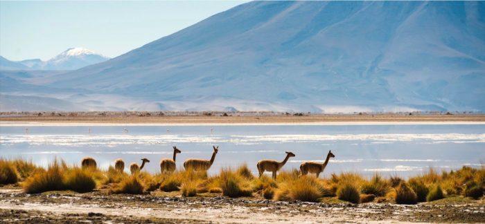 Con caída del 92% parte el primer trimestre de llegadas de turistas internacionales a Chile