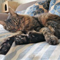 Gatos en cuarentena: los efectos de invadir su espacio