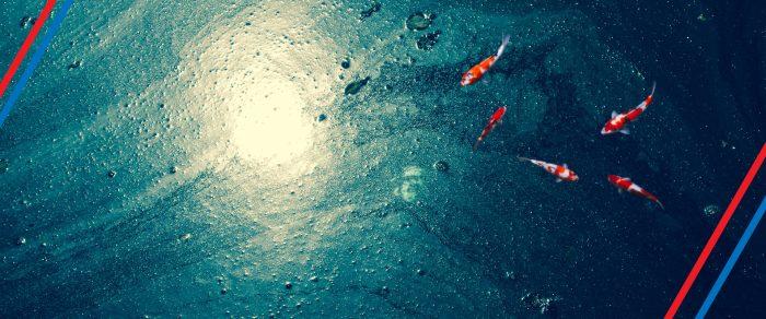 Exposición virtual «Protección de los Océanos y su Biodiversidad»
