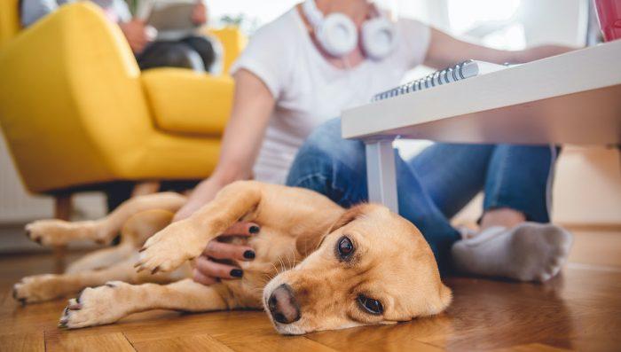 ¿Cómo lidiar con la ansiedad de las mascotas en casa con el aumento de las cuarentenas?