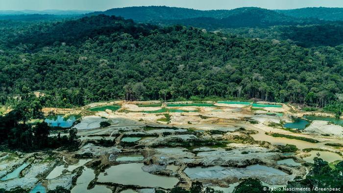 Deforestación que no cesa ni en pandemia: creció un 12 % en 2020