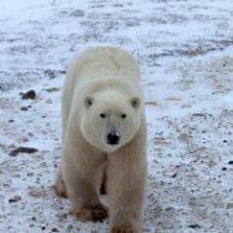 La otra cara del cambio climático: el efecto en animales