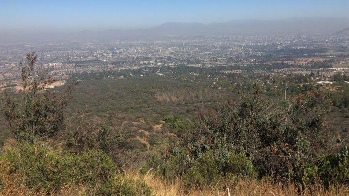 La batalla por el Panul y las amenazas al último bosque nativo de Santiago