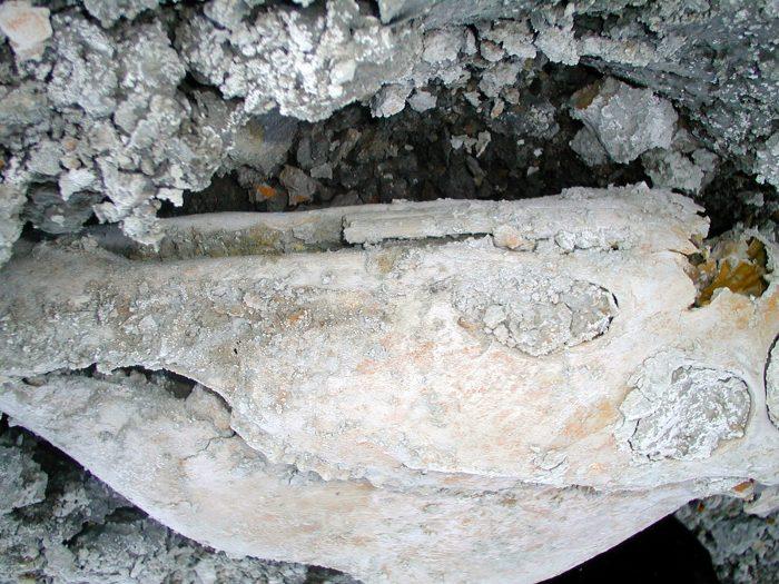 Encuentran caballo de 13 mil años  oculto bajo salar altiplánico