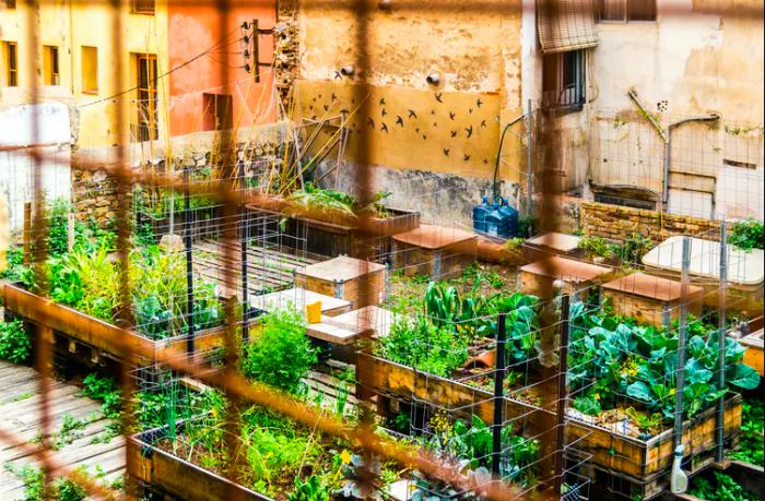 Huertos urbanos para mejorar la calidad de vida en las ciudades