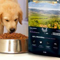 La importancia de una óptima alimentación canina