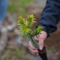 Día de la Tierra: restaurar bosques por la naturaleza y las personas