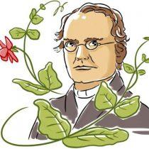Gregor Mendel: cómo un monje con un jardín de arvejas descubrió las leyes de la herencia genética