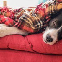 Se acerca el invierno: cómo proteger a las mascotas del frío
