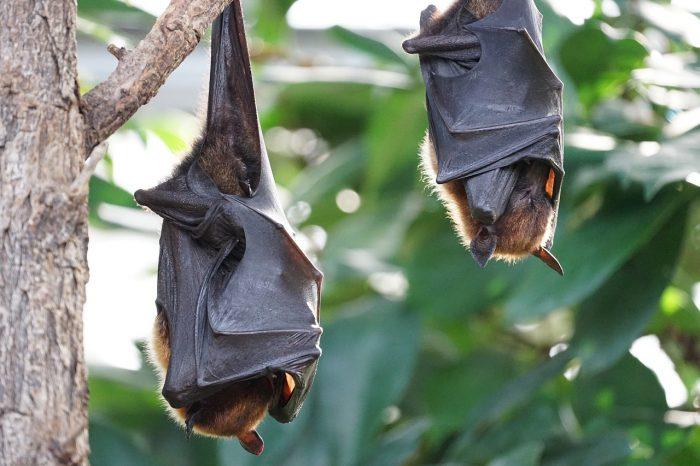 El mundo de los murciélagos abre el ciclo de Cafés Científicos 2021