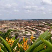 Aceite de palma: ¿es tan malo para el medio ambiente como se cree?