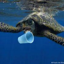 El 80 % de la basura del mar proviene de productos plásticos como bolsas y botellas