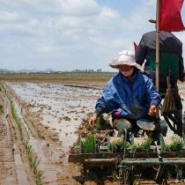 "Kim Jong Un admite ""tensa"" situación alimentaria en Corea del Norte"